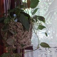 Old-Fashioned Granny Plant Holder