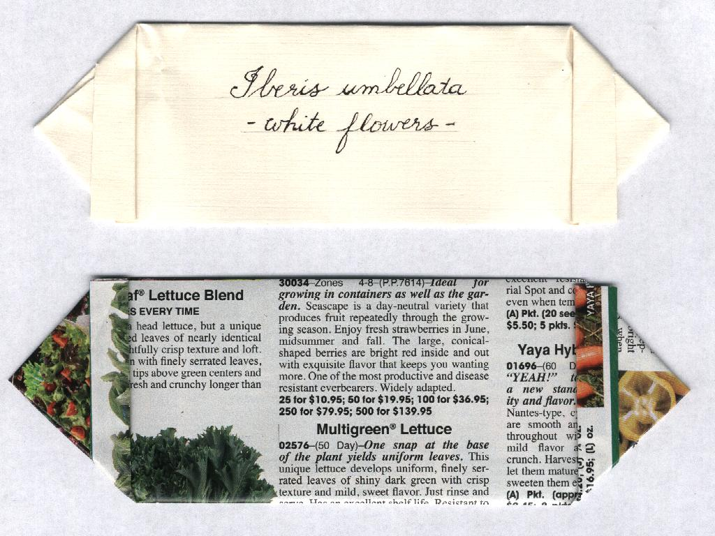 Seed Storage Ii Antique Folded Seed Packets Something