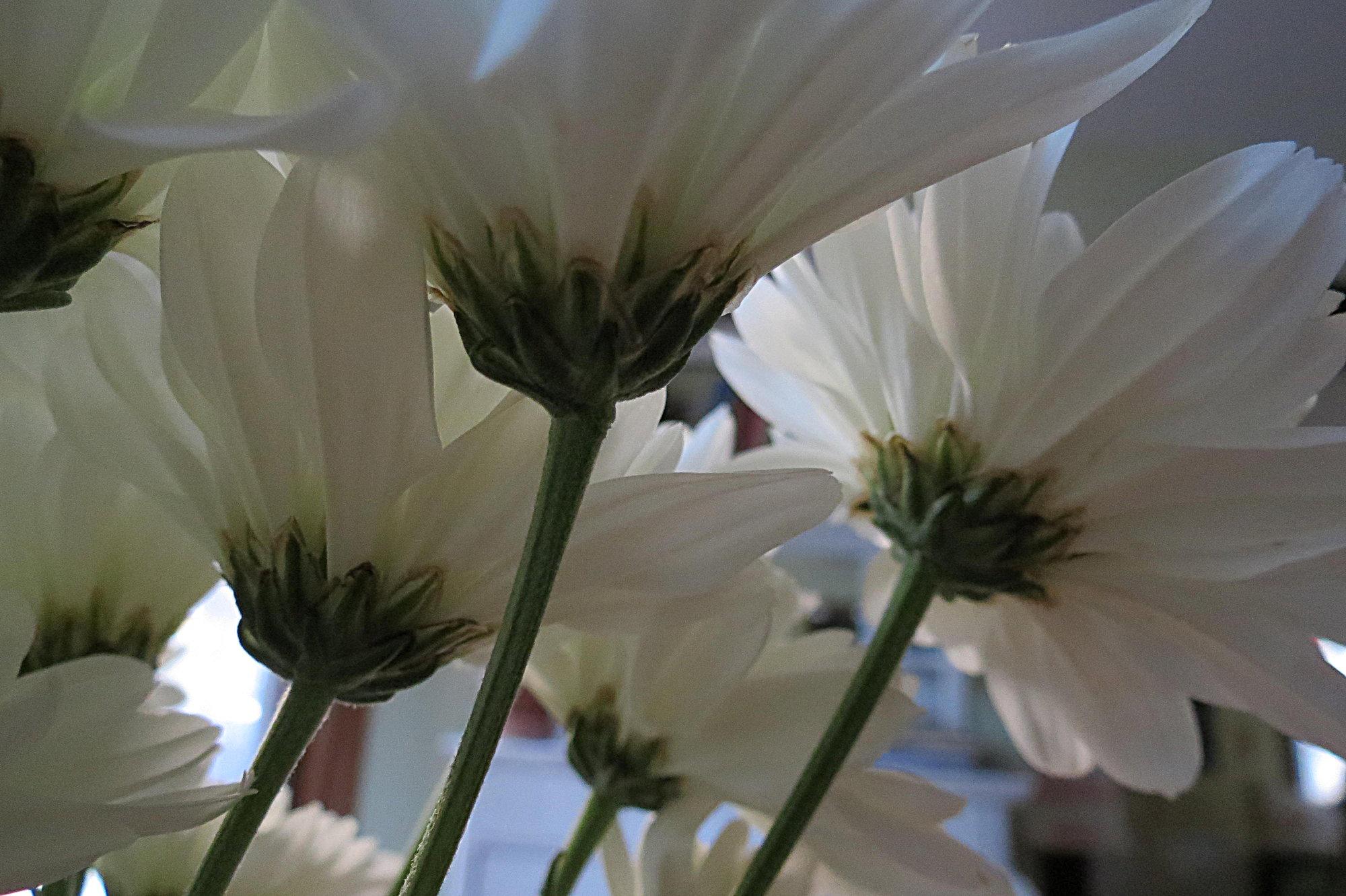 Cómo canalizar una flor mullida de crema de mantequilla - soy panadero