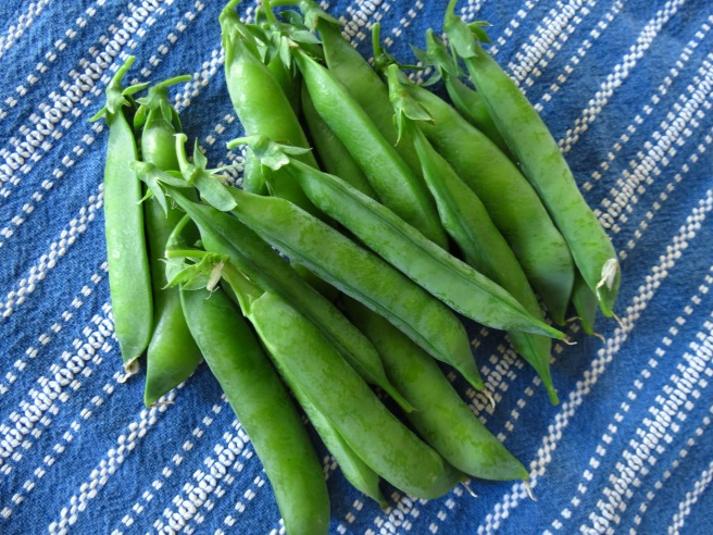 """We grew """"Mr. Lincoln,"""" heirloom peas. They were delicious, and even the pod was tender and tasted good."""