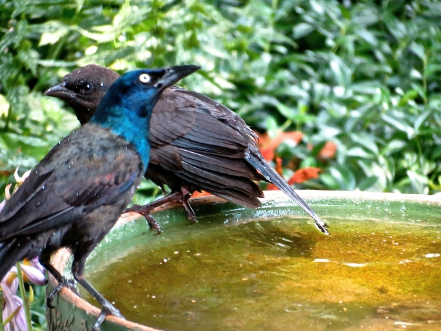 Is this bird bath big enough for the two of them?