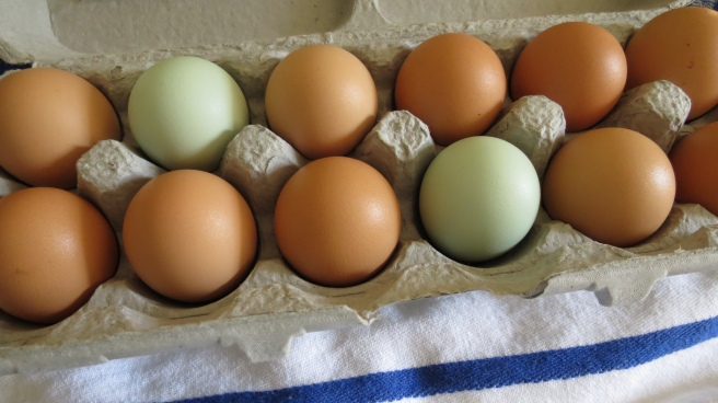 Free-range eggs from a local farm.